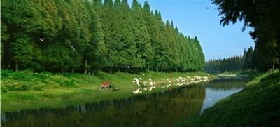 潜江市环境污染综合整治系列报道之三:让水乡园林