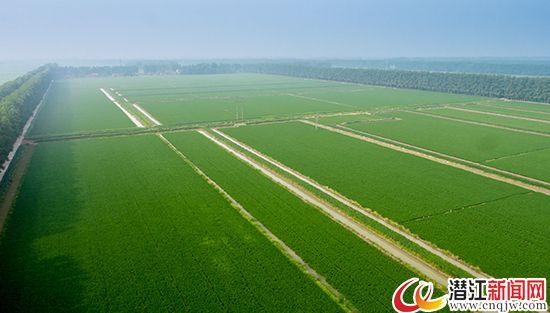 水乡土壤育万物 现代农业看潜江
