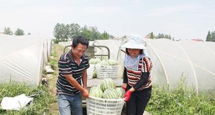 """村组长带头发展连片种植 大棚""""瓜瓜菜""""效益高"""