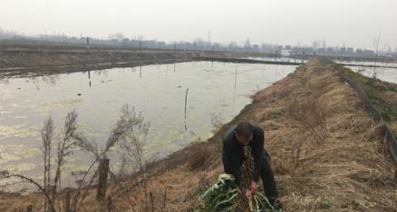 [新春走基层]小龙虾养殖带来脱贫新希望